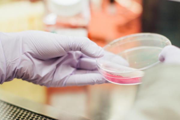 Los evangélicos franceses creen que la nueva ley de bioética pone a los más débiles en manos del mercado y la tecnología